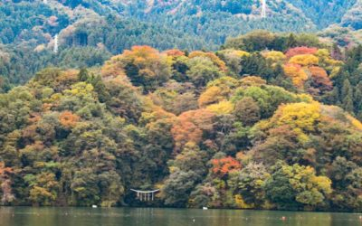相模湖の木々が色づき始めました!紅葉2020